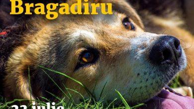 """Photo of Târg de adopții gratuite de câini organizat de PMB în Parcul Izvor. De ce documente ai nevoie să pleci acasă cu patrupedul """"pereche"""""""