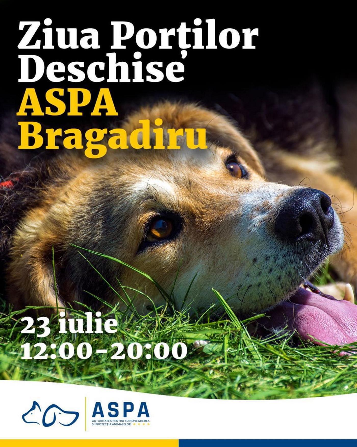 """Târg de adopții gratuite de câini organizat de PMB în Parcul Izvor. De ce documente ai nevoie să pleci acasă patrupedul """"pereche"""""""