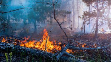 Photo of MAE informează că în Grecia există pericol ridicat de incendii. Atenționare de călătorie