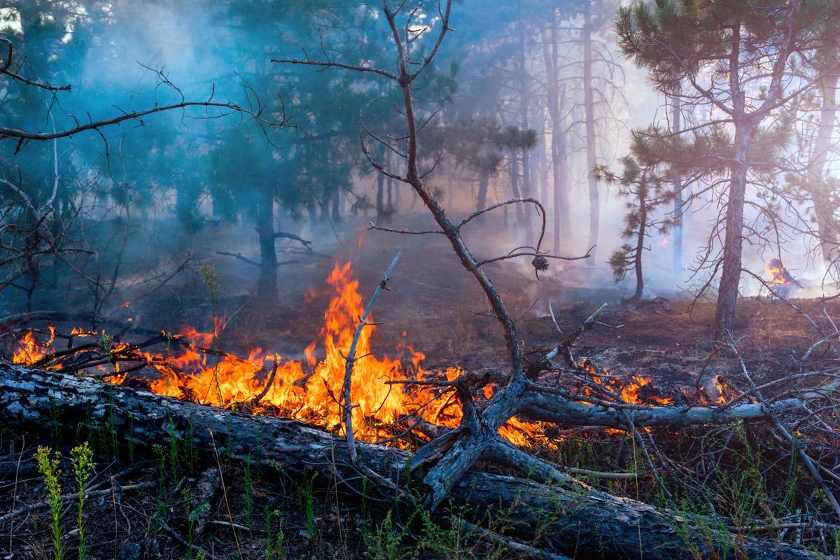 în Grecia există pericol ridicat de incendii