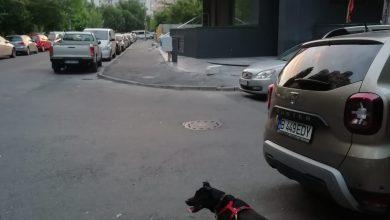 Photo of Căldura vine în București la pachet cu un miros oribil. E mirosul lăsat în urmă de stăpânii de câini care nu strâng după. Soluția la alții: adună probe ADN lăsate-n drum