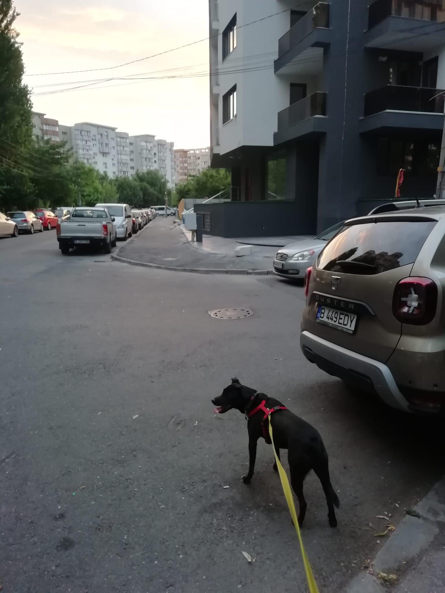 Căldura vine în București la pachet cu un miros oribil. E mirosul lăsat în urmă de stăpânii de câini care nu strâng după. Soluția la alții: Adună probe ADN lăsate-n drum