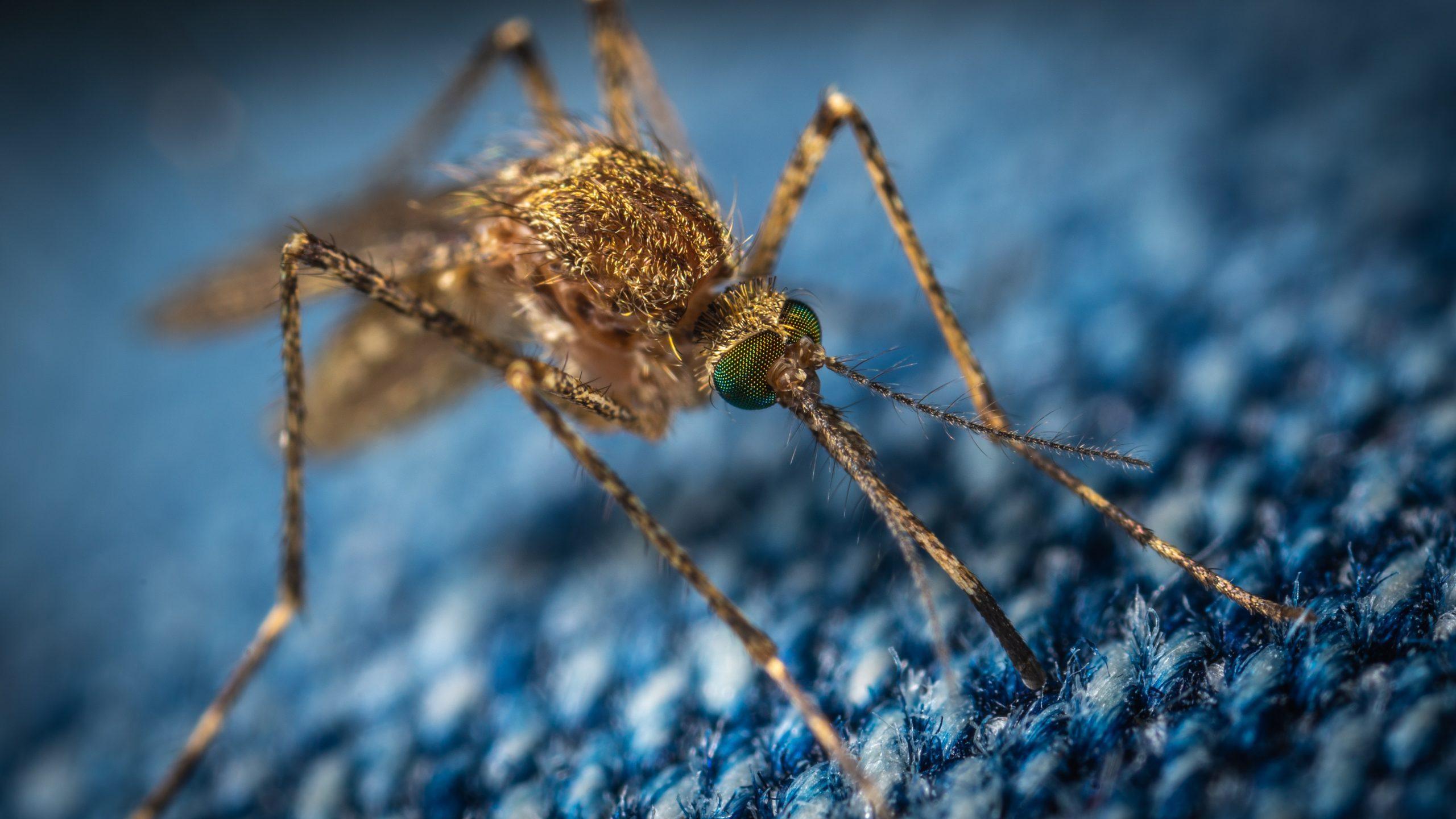 Atenție, bucureșteni - au fost depistați țânțari purtători ai virusului West Nile în Capitală. În ce zone se află aceștia