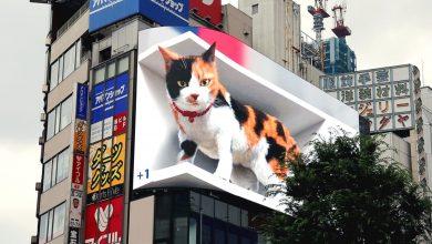 Photo of Ce am văzut la Tokyo și vrem și noi, la București. O pisică 3D uriașă prinde viață și toarce deasupra unei gări din oraș