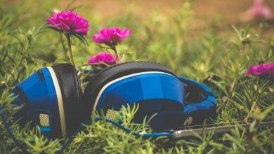 Photo of Seri de vară muzicale în Parcul Romniceanu (P)