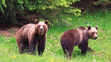 Photo of O turistă din București care hrănea un urs a fost amendată