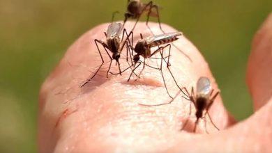 Photo of Alertă West Nile în București. Institutul Cantacuzino confirmă existența țânțarilor periculoși în Capitală. Virusul poate provoca o infecție gravă și potențial fatală a creierului UPDATE