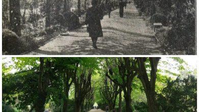 Photo of Propunere de nerefuzat pentru salvarea Parcului Cișmigiu. Asociaţia Peisagiştilor oferă sprijin Primăriei Capitalei pentru această zonă verde lăsată de izbeliște