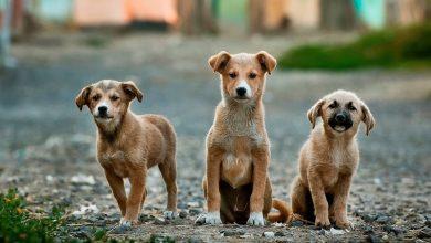 """Photo of ASPA demarează """"Caravana responsabilității"""". Campanie de informare despre beneficiile microcipării și sterilizării animalelor"""