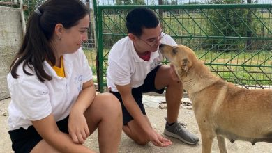 Photo of Câinii din centrele ASPA sunt îngrijiți de patru voluntari turci. Încă mai aveți timp să vă găsiți un prieten blănos în Parcul Izvor