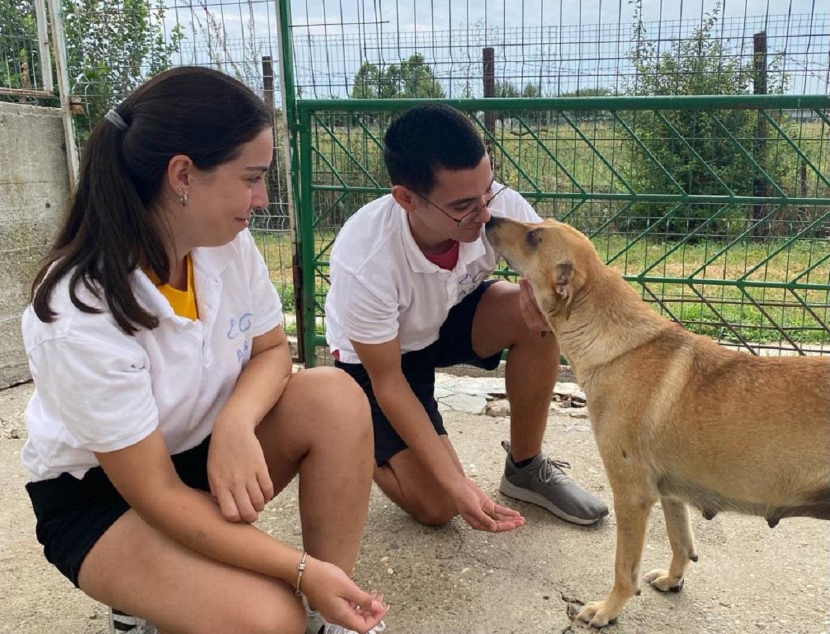 Câinii din centrele ASPA sunt îngrijiți de patru voluntari turci. Încă mai aveți timp să vă găsiți un prieten blănos în Parcul Izvor