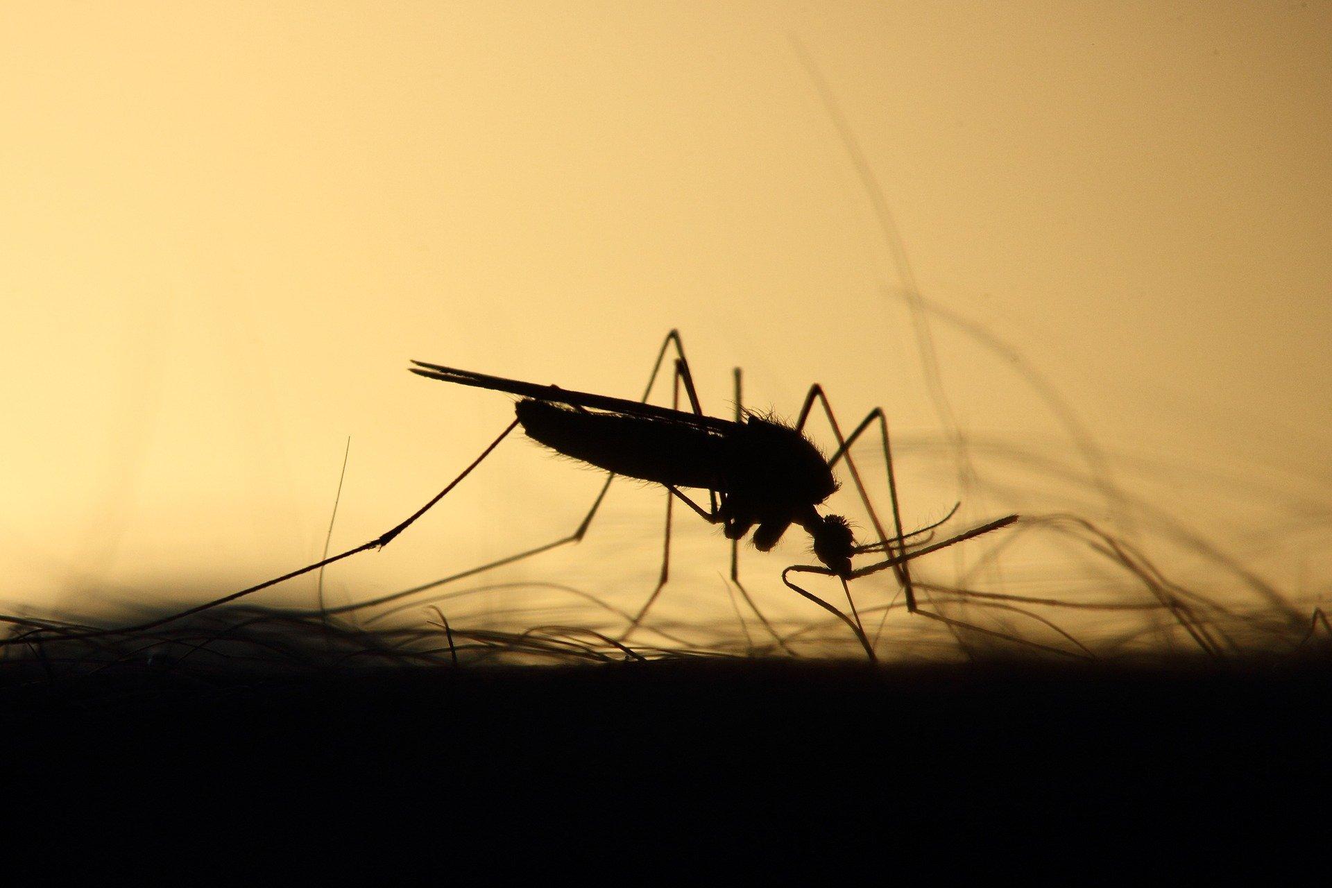 Vine toamna și insectele tot ne bâzâie. Primăria Capitalei începe al 9-lea tratament de combatere a țânțarilor