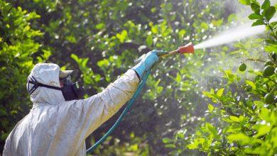 Photo of Tratamente împotriva dăunătorilor vegetali aplicate în Sectorul 6 toată luna august