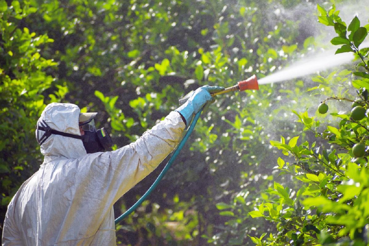 Tratamente împotriva dăunătorilor vegetali aplicate în Sectorul 6