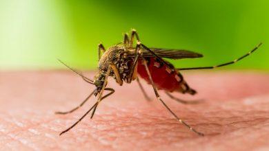 Photo of Primul caz de infecţie cu virusul West Nile în București. Din fericire nimeni nu a murit, dar autoritățile au lansat un avertisment privind țânțarii