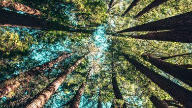 Photo of Sute de copaci urmează să fie plantați în Sectorul 6. Ciprian Ciucu anunță străzile vizate