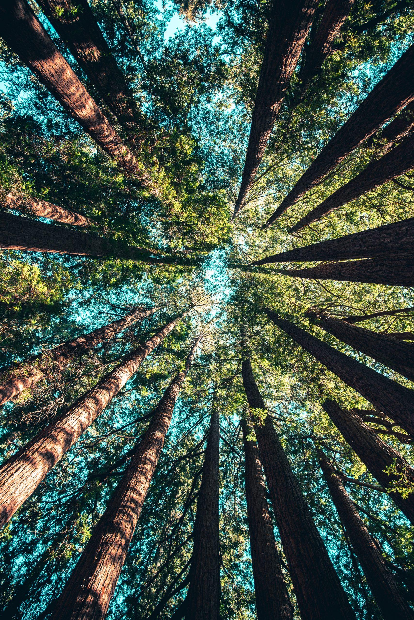 Sute de copaci urmează să fie plantați în Sectorul 6. Ciprian Ciucu anunță străzile vizate