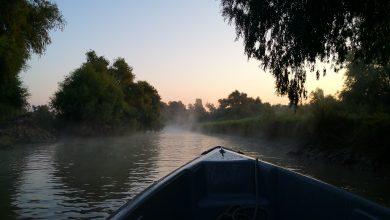 Photo of Pește așteptări. Am mâncat pentru tine în Delta Dunării storceag, borș de pește, scrumbie la grătar și pepene de baltă