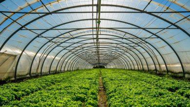 Photo of Cum îți protejează plasa de umbrire recoltele împotriva capriciilor vremii (P)