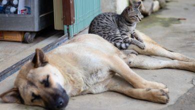 Photo of 10.000 de câini și pisici din București vor fi sterilizate gratuit de Primăria Capitalei. Tot ce trebuie să știți despre această inițiativă