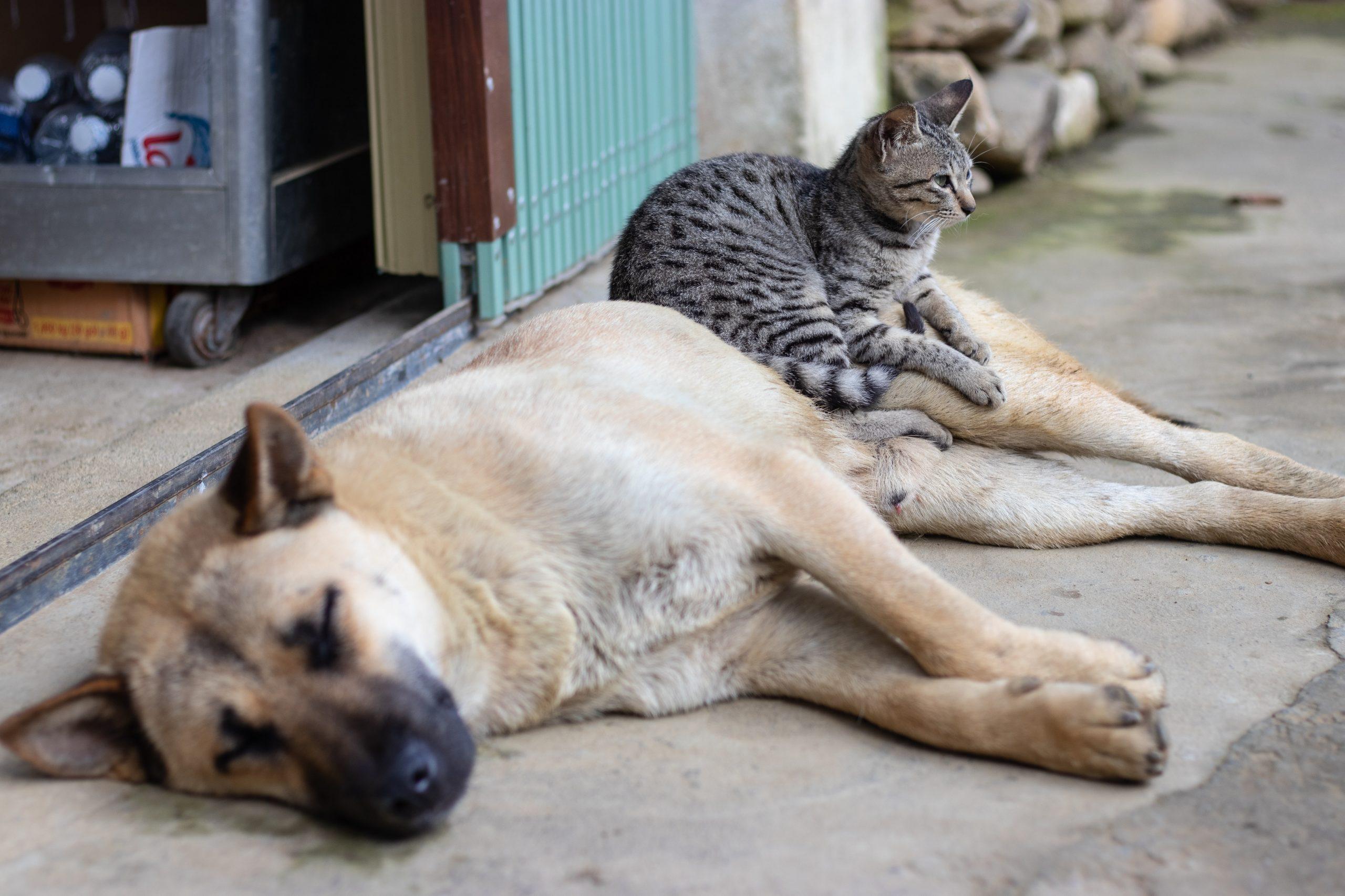 10.000 de câini și pisici din București vor fi sterilizate gratuit de Primăria Capitalei. Tot ce trebuie să știți despre această inițiativă