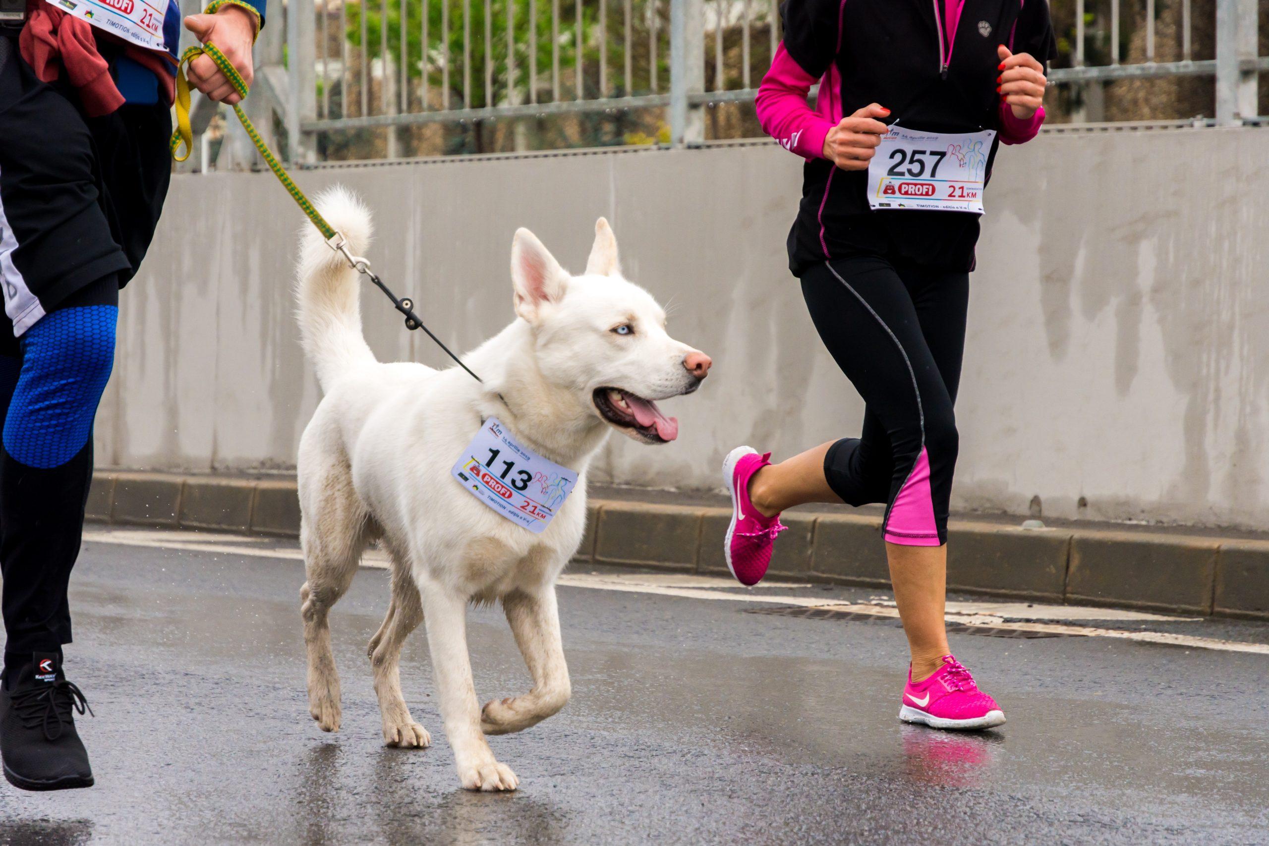 Șapte medici iau startul la Semimaratonul Bucureștiului. Strang fonduri pentru două spitale din Capitală