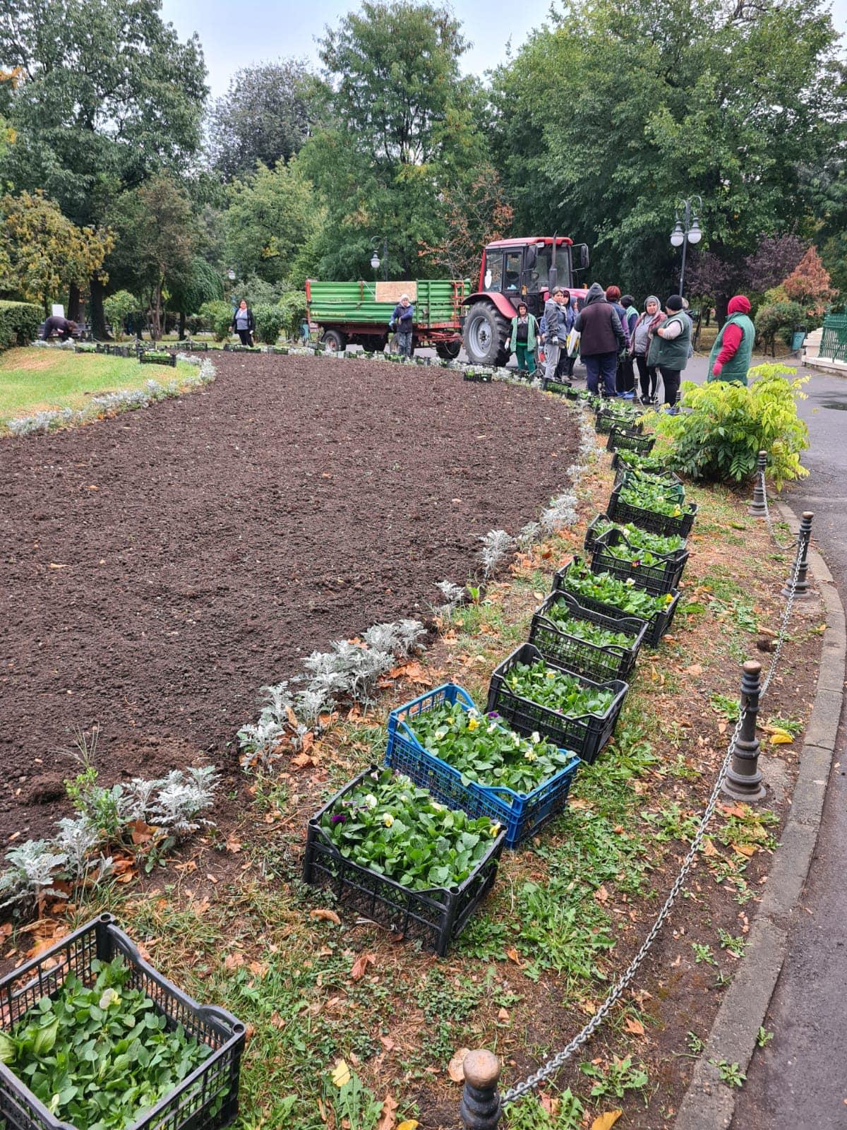 Se plantează panseluțe în Parcul Cișmigiu. O nouă acțiune bulversantă, după cea a curățării statuilor