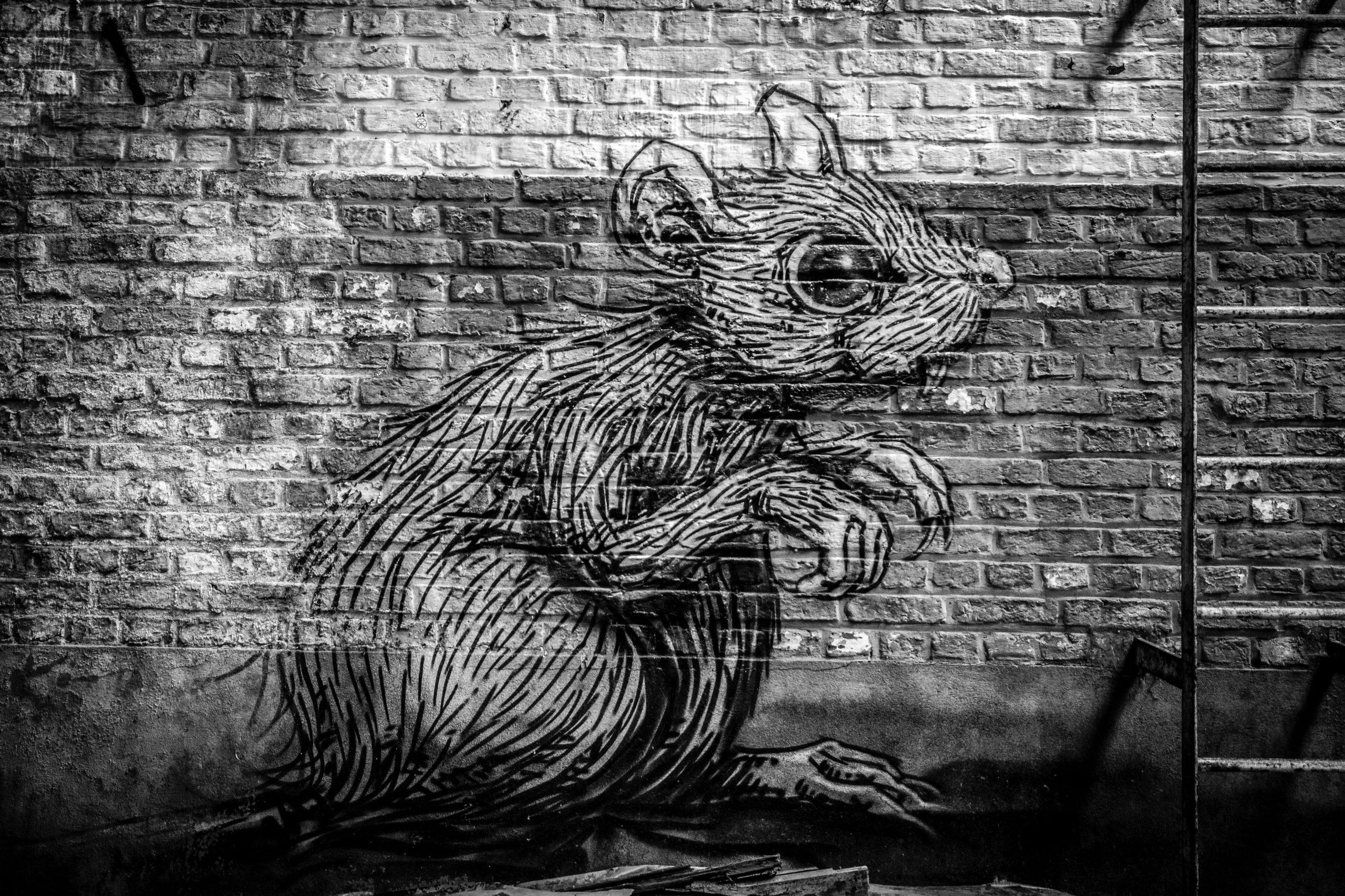 Primăria Capitalei continuă lupta cu șobolanii. Începe al treilea tratament de deratizare