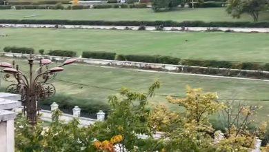 Photo of Grădina din curtea Palatul Parlamentului, plină de fazani. Zona aflată în paragină a umplut centrul Bucureștiului de păsări sălbatice | VIDEO