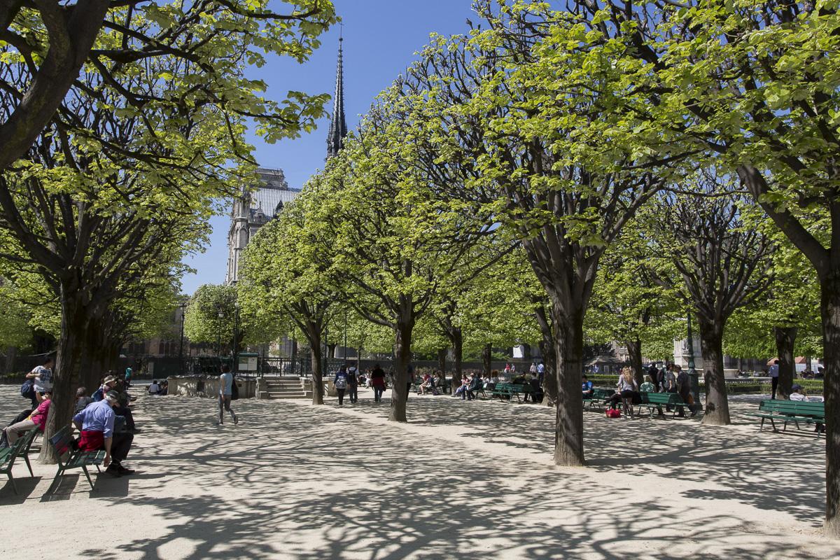 Împrejurimile Catedralei Notre-Dame, imagine dintr-un proiect câștigător. Sursa: Primăria Parisului
