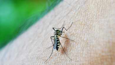 Photo of A 13-a campanie de combatere a țânțarilor din București. Tratamentele se realizează zilnic de la periferie către centru