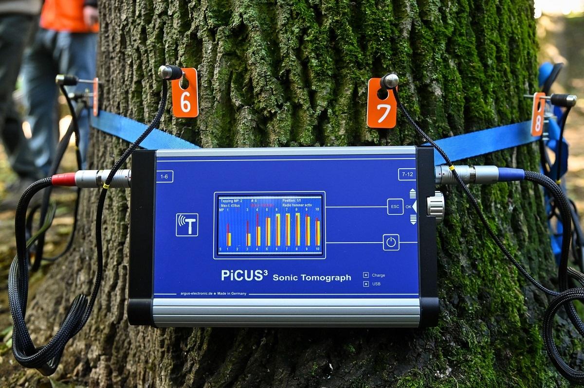 Copacii din Sectorul 4 sunt consultați zilele acestea, însă nu cu stetoscopul, ci cu tomograful. Cum funcționează tehnologia adusă în premieră în București