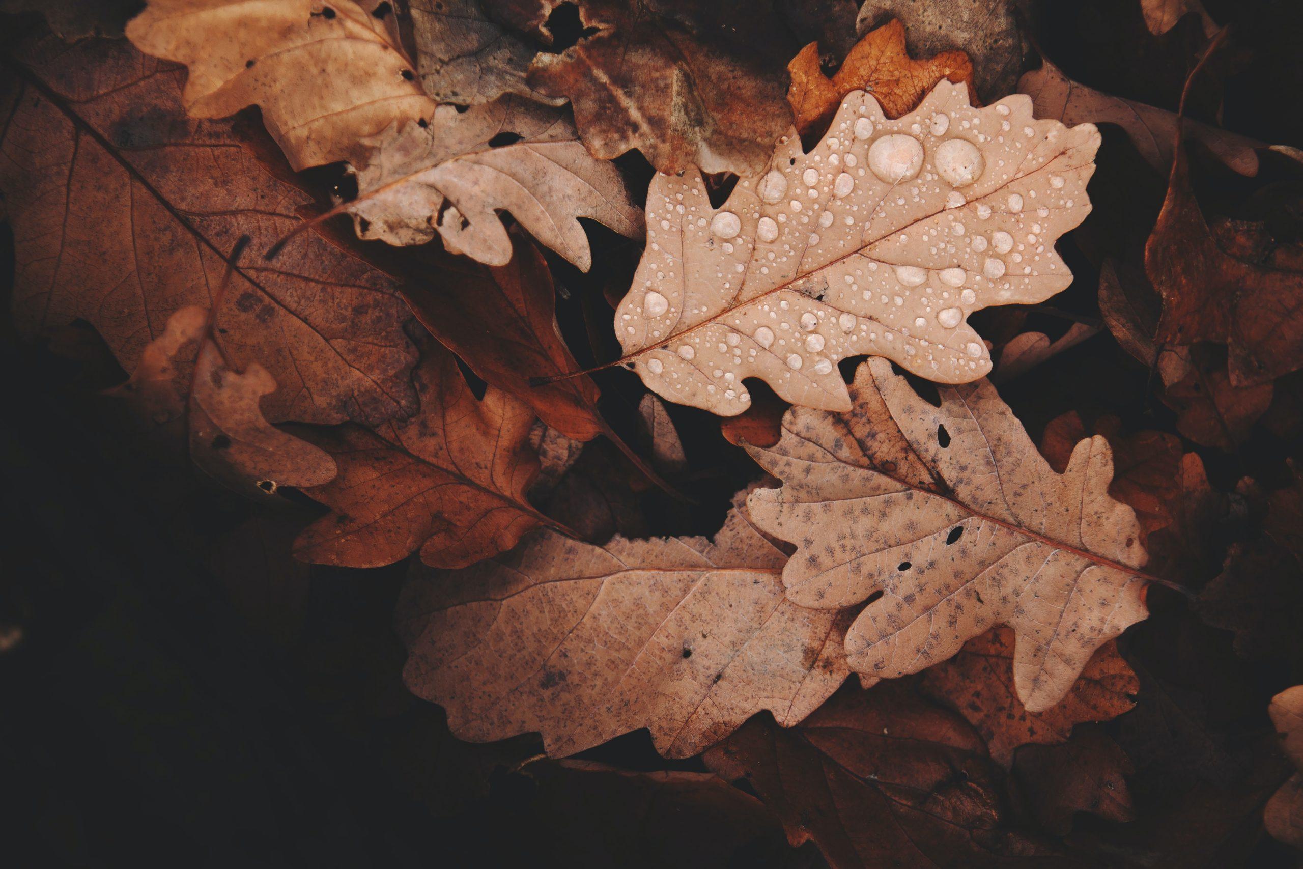 Vremea în București, joi, 7 octombrie. Temperaturile încep să scadă